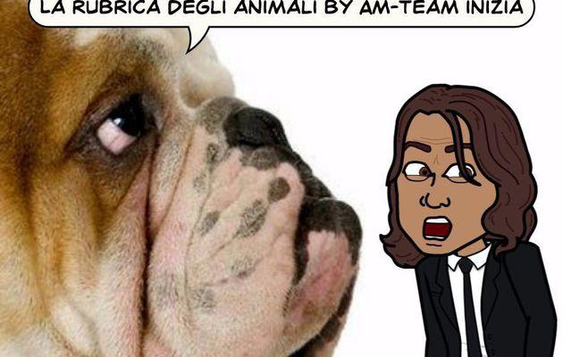 il cane al mare-LR team frankhair-