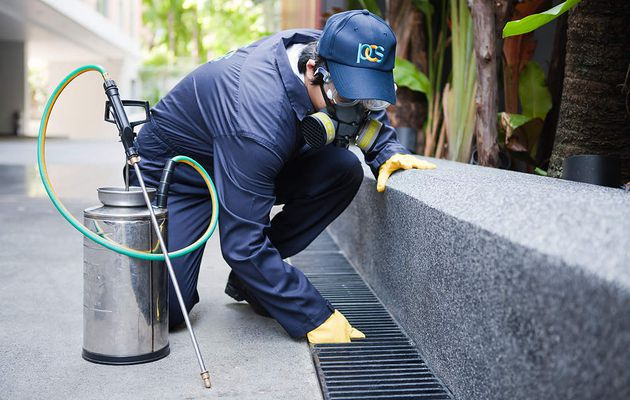 Why Pest Control Services Are The Basic Necessity For Clean Homes?