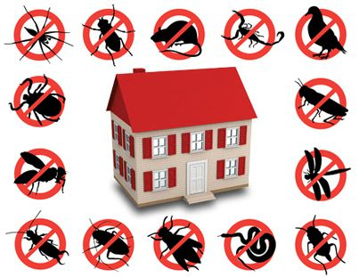 Benefits of Choosing Green Pest Control Method Rather than Others