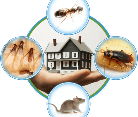 Get rid of carpenter ant in Vancouver