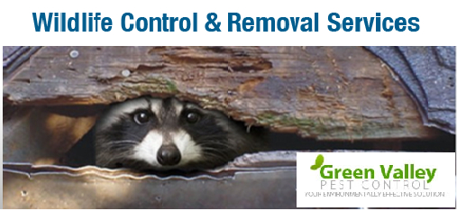 How to hire the right wildlife control company