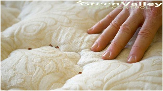 Get the best solution for bed bug control at your house