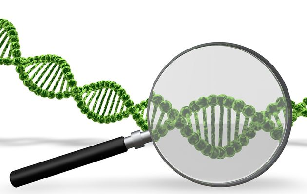 Genealogy DNA Tests for Families