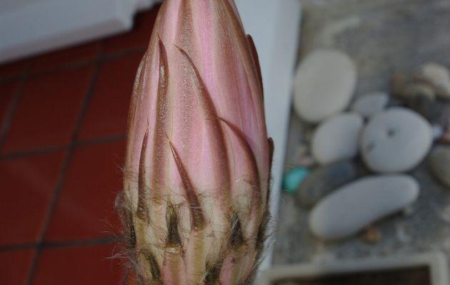 L'éphémère floraison