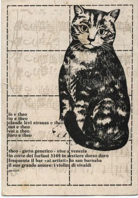 Théo, célèbre chat vénitien, client du bar Ai Artisti