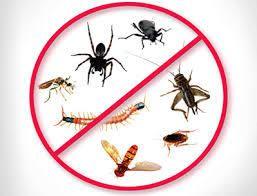 شركة مكافحة حشرات بالمدينة المنورة| المنزل