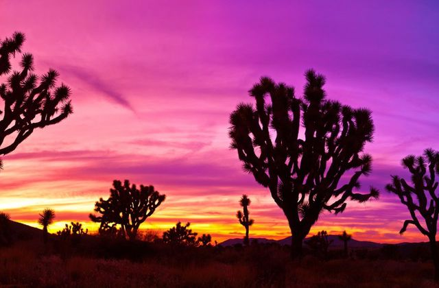 Joshua tree's call