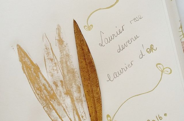 Laurier d'or