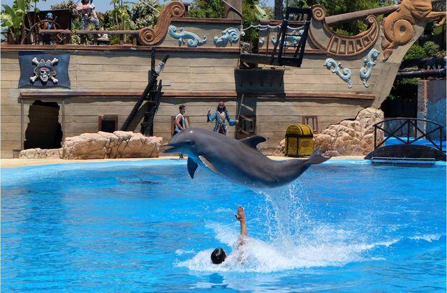 L'extraordinaire rencontre avec les dauphins à Mundo Mar !