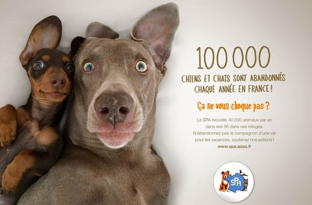 NMF, pourquoi adopter un animal si c'est pour l'abandonner...