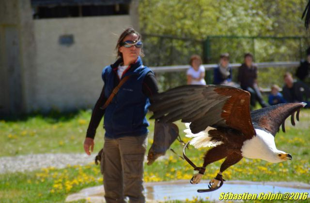 Le rocher des aigles à Rocamadour, le spectacle de la nature
