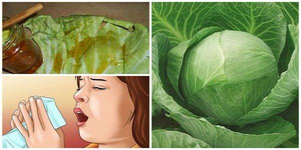 """Le remède le plus rapide pour les toux chroniques et la bronchite : """"retirer"""" votre maladie avec un super-écharpe faite à partir de feuilles de choux et de miel !"""
