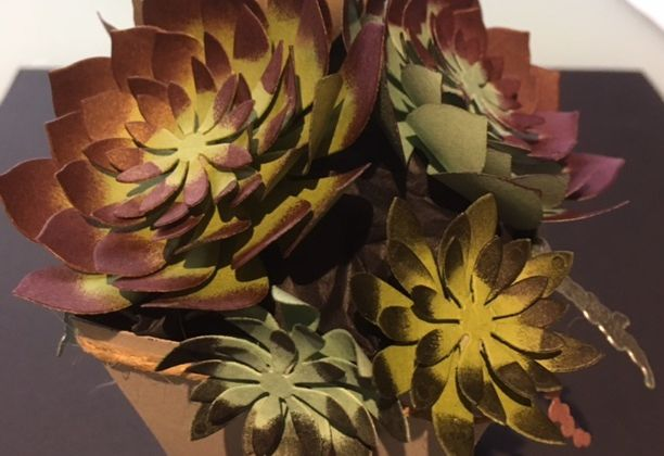 """Des succulentes """"plus vraies que natures"""""""