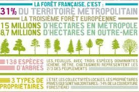 21 mars, Journée Internationale de la forêt