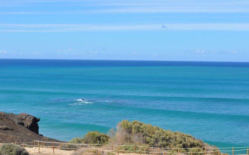 Surfer paradise !