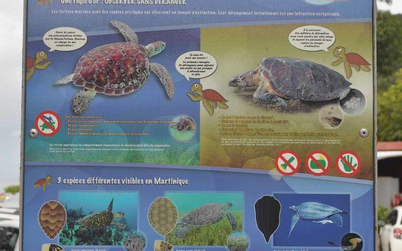 Grand Anse : un repère de tortues