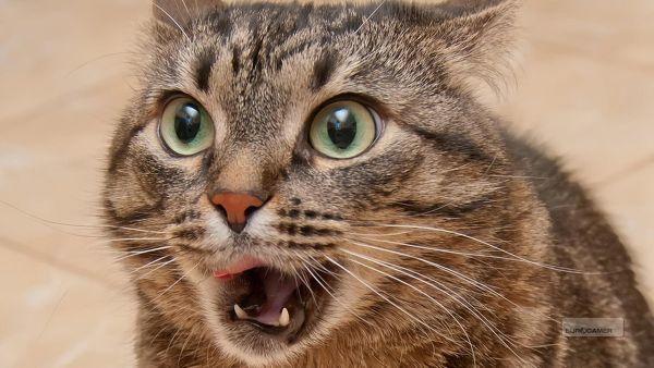 PS Store : un mois de mai de folie