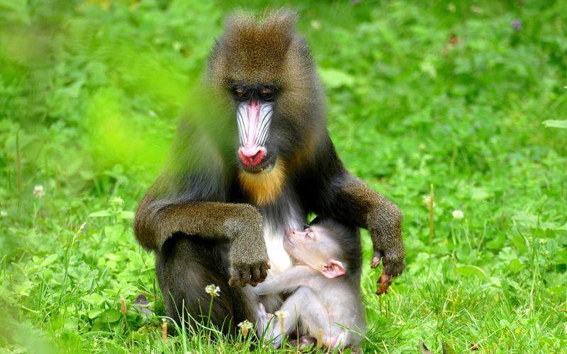 La Vallée des Singes, le paradis des primates