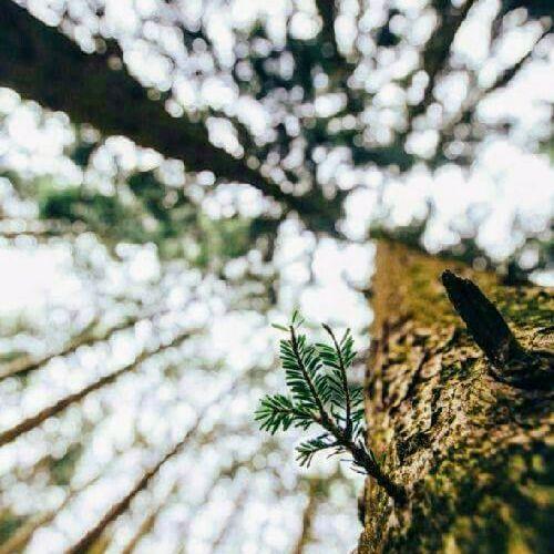 Hasta el árbol más grande, se alimenta de lo que tiene abajo