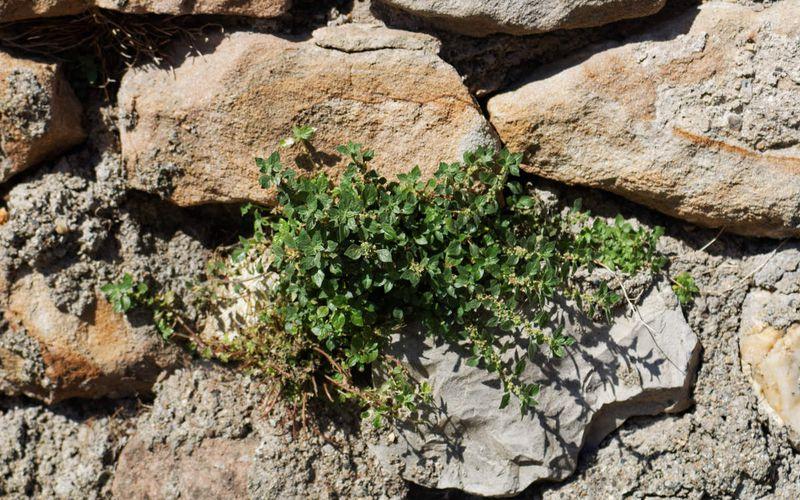 feuilles sur un mur