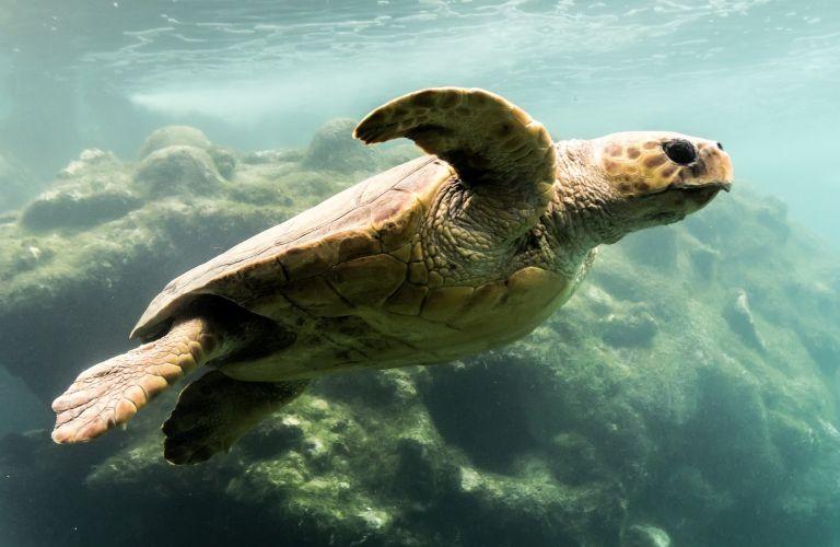 Kélonia - le parc aux tortues