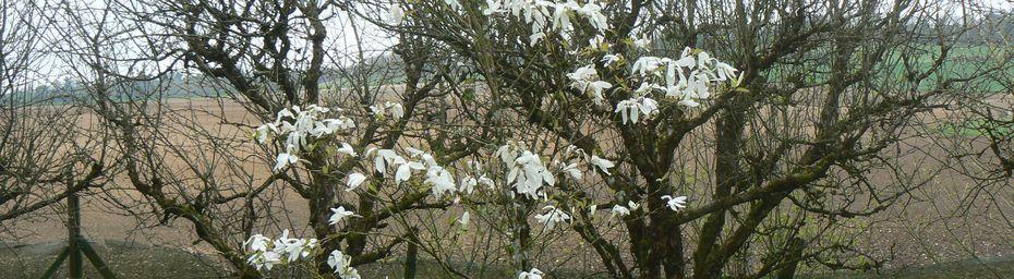 Le printemps se réveille