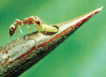 Les hôtels de fourmis