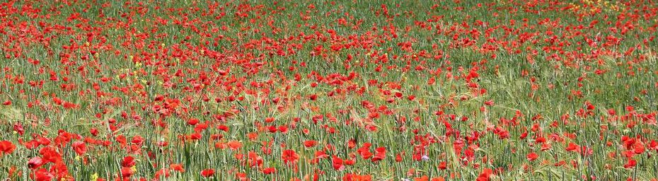 Luxueuse invasion !