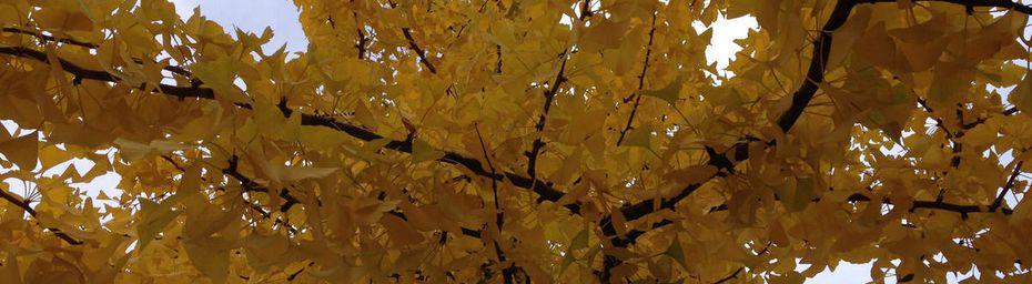Ciel d'automne...