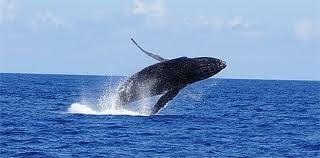 L'énergie de la Baleine