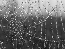 Toile d'araignée universelle
