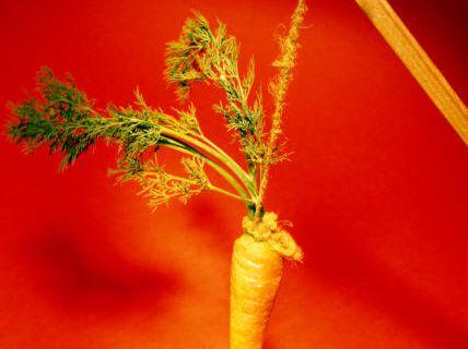 Dans la course, les carottes ça ne rend plus aimables