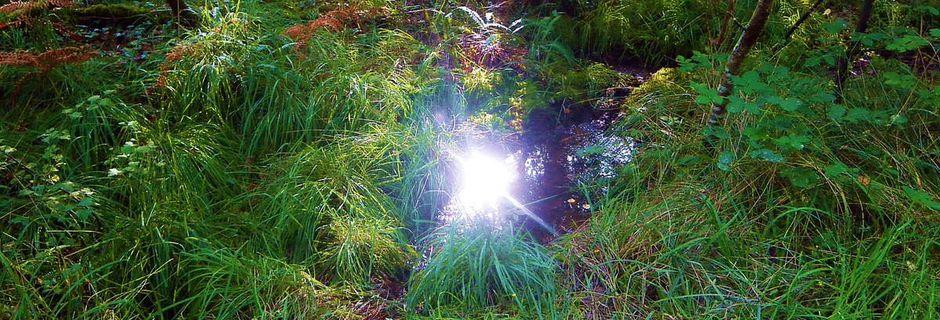Illusion féerique dans la forêt de Brocéliande