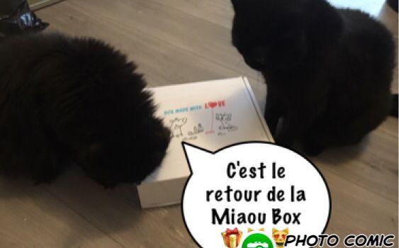 Le retour de la Miaou box 😻😻