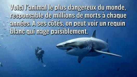 L'ignoble massacre des requins