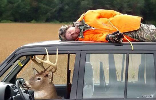 La chasse en France, c'est 30 millions d'animaux, par an, massacrés pour le plaisir