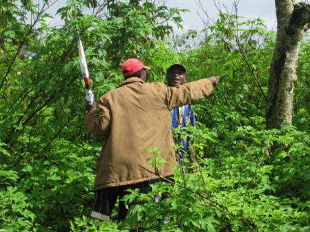 Fundo soberano apoio a agricultura no Uige