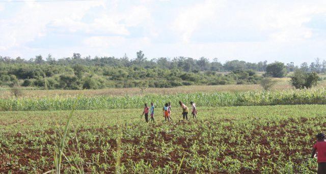 UNACA quer aumento da produção agrícola no Púri