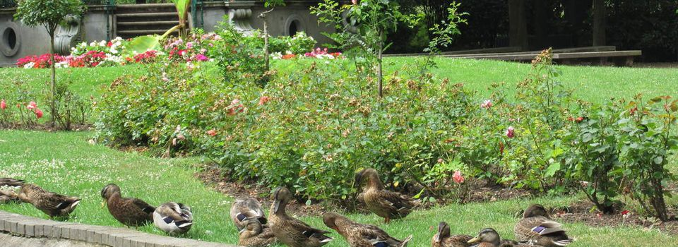 1878: ces animaux qui investissent le jardin public (article 3/7)