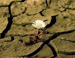 Bloguer dans le désert
