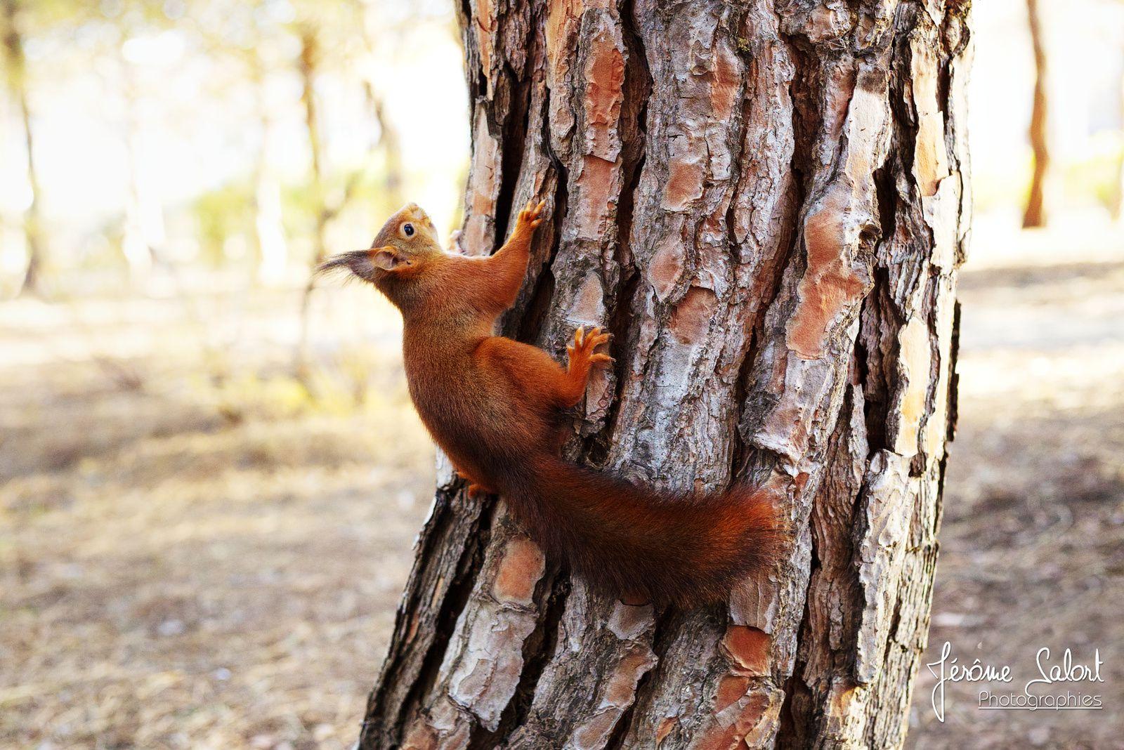 Les écureuils du Lydia Jérôme Salort ©
