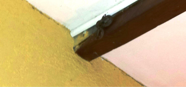 Elle aime bien notre compagnie....elle vit sous le toit de la terrasse, à l'abri .