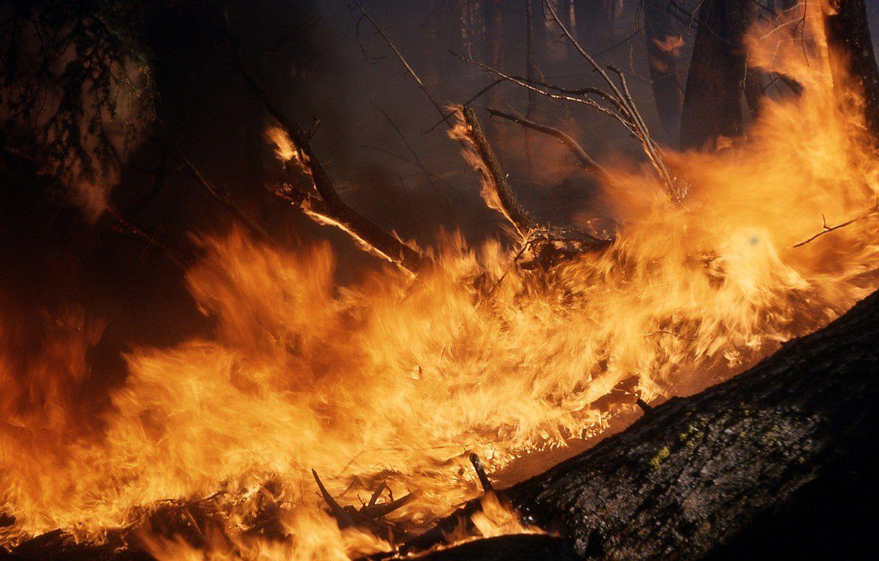 PHOTO: CREATIVE COMMONS / SKEESE - L'augmentation de la déforestation à des fins commerciales, légales et illégales a provoqué cette année 71 497 sources de feu en Amazonie brésilienne.