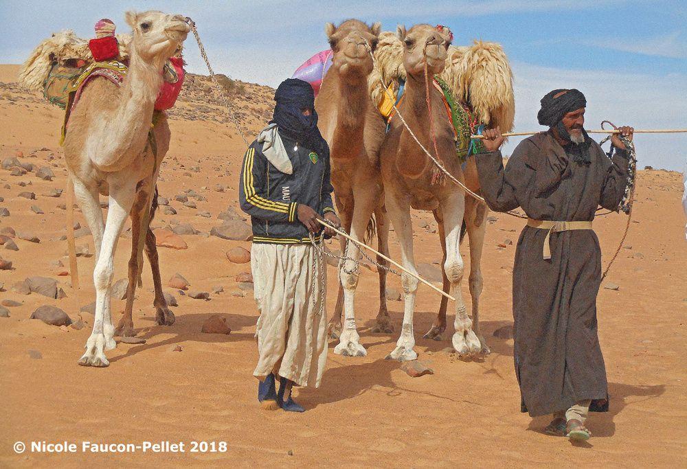 De la truffe (rabasse) à la Mauritanie