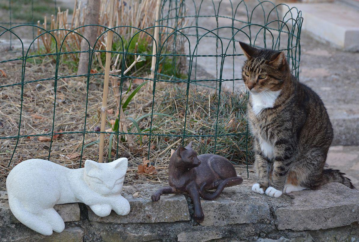 Grisou, mon beau chat de gouttière