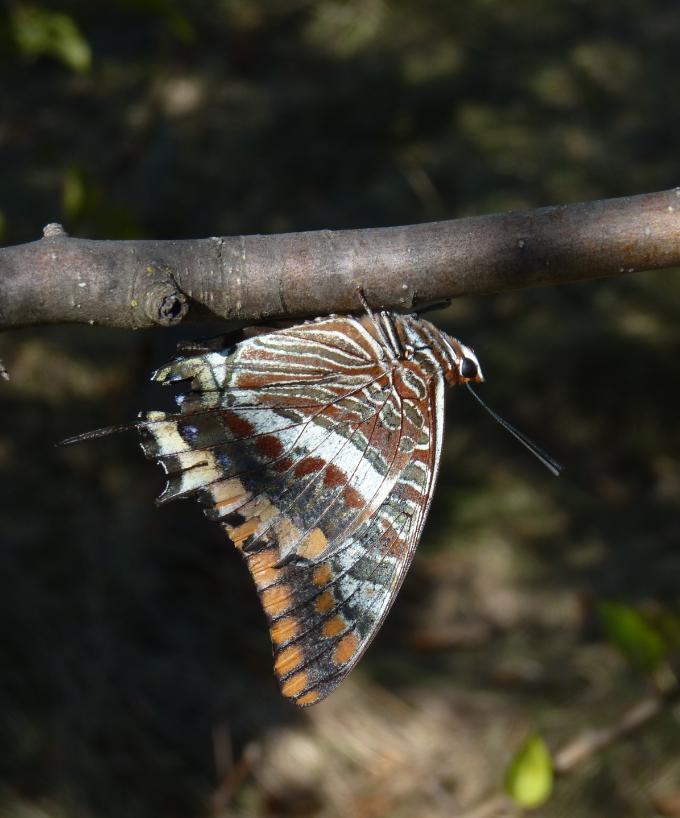 Surprises d'automne dans le bois des Lens