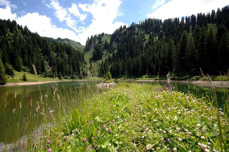 Swiss Peaks 80k