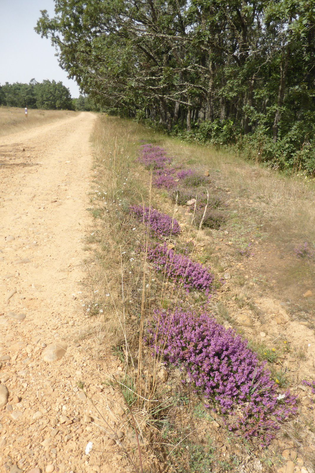 De petites fleurs violettes sont parsemées tout au long du chemin. Nous croisons personne jusqu'au prochain village.