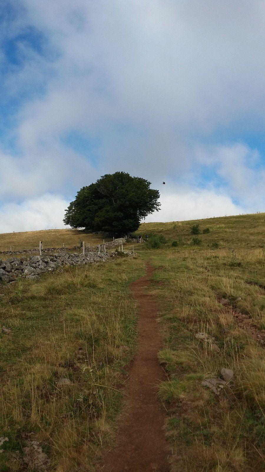 Nous commençons notre petite montée sur le plateau de l'Aubrac. Sylvie maintient fermement Emeric dans la montée car les ornières sont nombreuses.