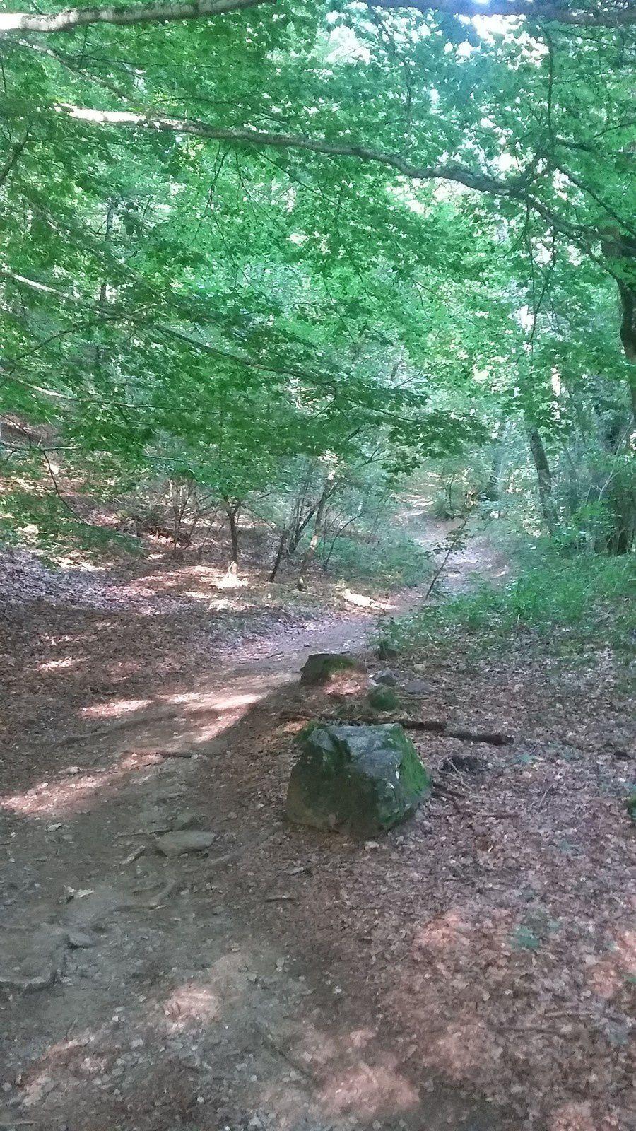 """En quittant le lieu-dit """"le Recours"""" nous pénétrons dans le Bois de Grosmaurel."""